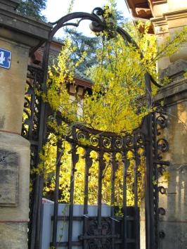 6. Forsythia Gate